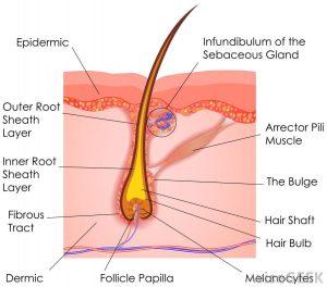 ساختار مو و انواع جنس مو